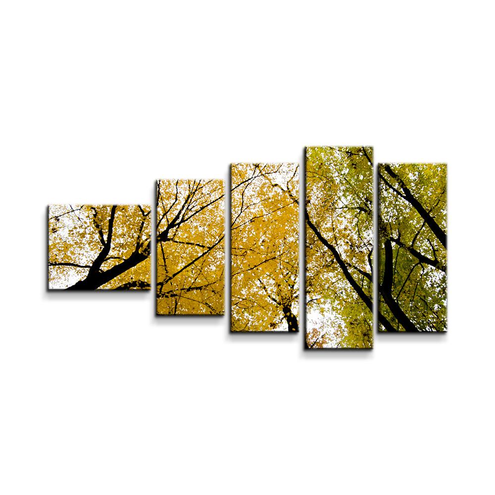 Koruny stromů