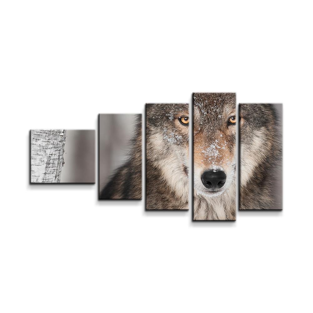 Vlk 2