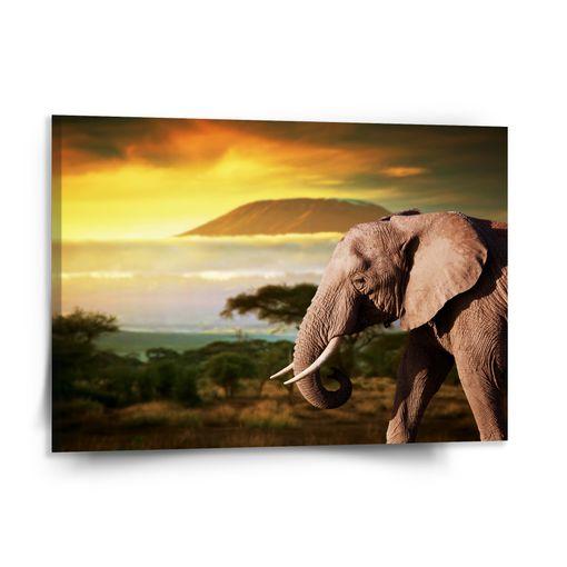 Slon z profilu