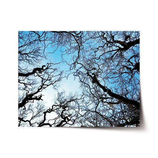 Holé větve
