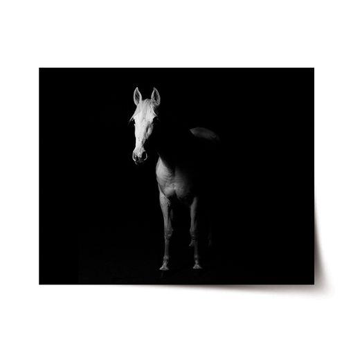 Kůň ve stínu