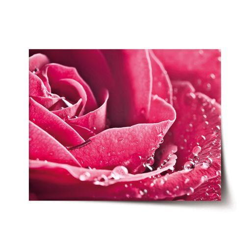 Detail růže
