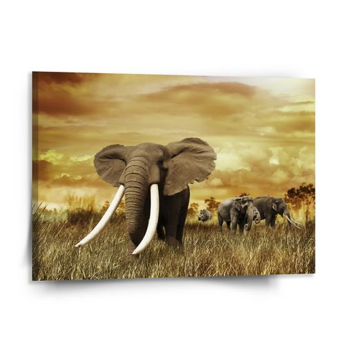 Slon Africký