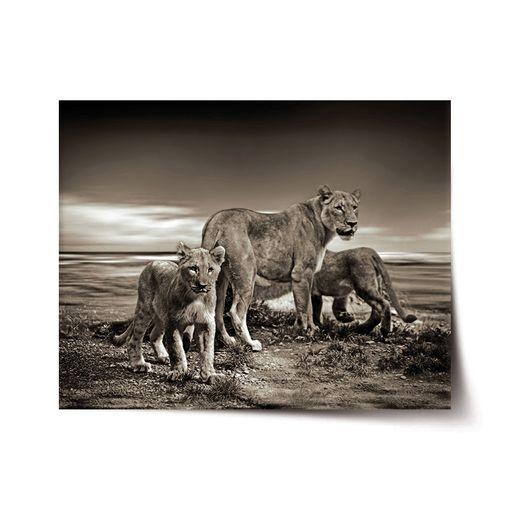 Lvice a lvíčata