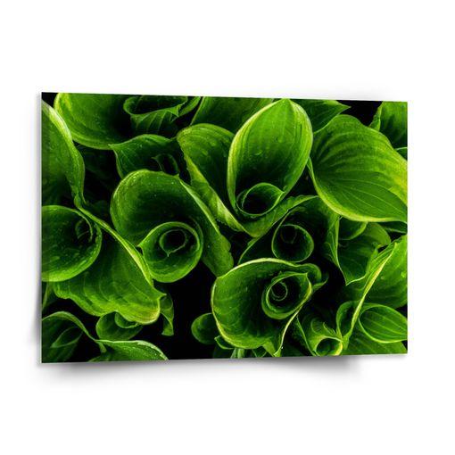 Zelené listy