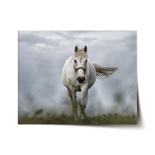 Bílý kůň 3