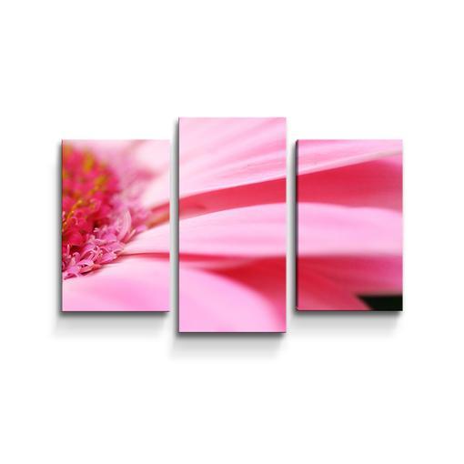 Růžová gerbera