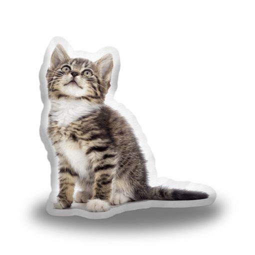 Mourované koťátko