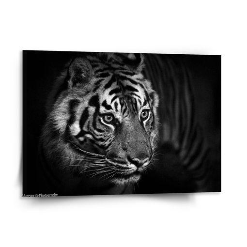 Černobílý tygr