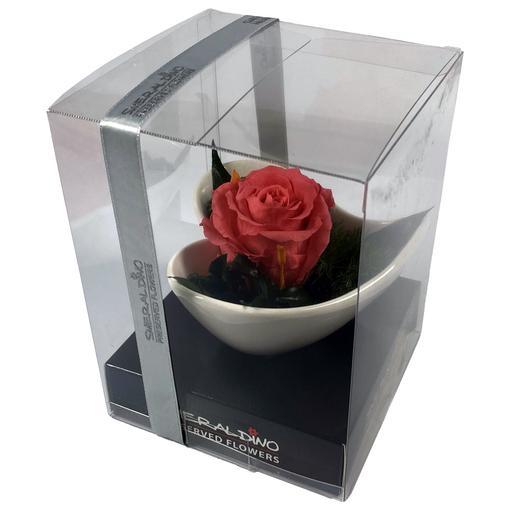 Růže růžová s aranže - dlouhotrvající