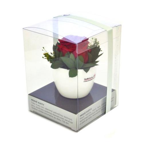 Růže červená s aranže - dlouhotrvající
