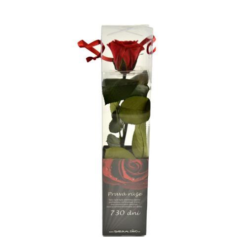 Červená růže - dlouhotrvající
