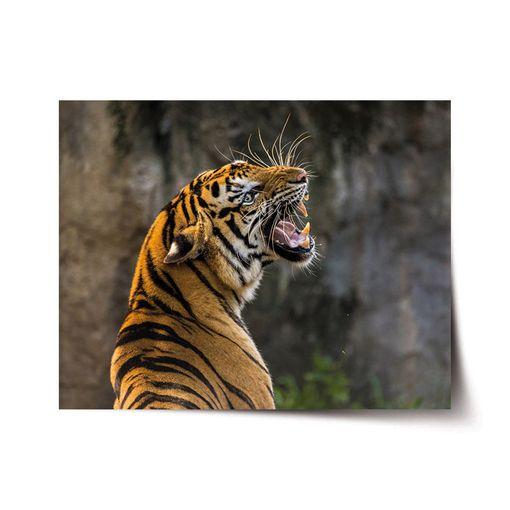 Řvoucí tygr