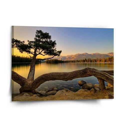 Strom u jezera